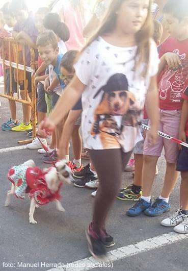 gitanilla_mascotas