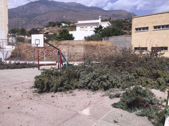 Los vecinos han usado las redes sociales para denunciar la tala de árboles en el colegio público Luis Vives de Dalías