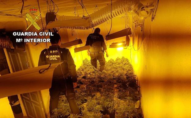 marihuana_01-k0gh-u70275710505hr-624x385@ideal